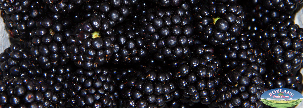 Ripe Blackberries we produce